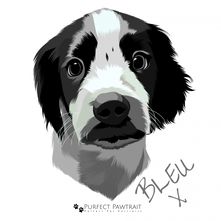 dog portrait, dog keepsake, dog memory