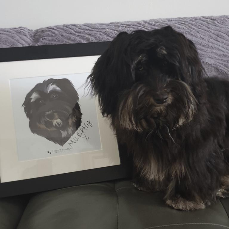 Murphy dog portrait