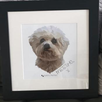 Meesha Dog Portrait