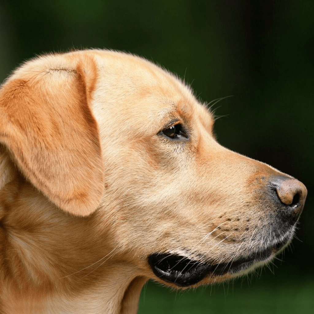 Dog5 (1)
